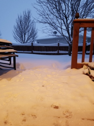 snow off deck